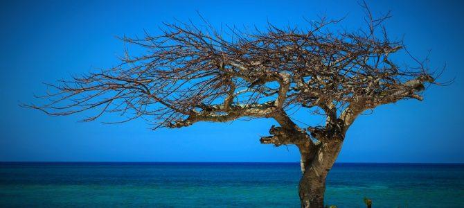 Cuba, une île fascinante des Caraïbes