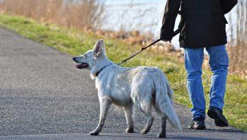 bienfaits promenade chien