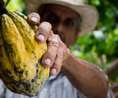cocoa-452911_640