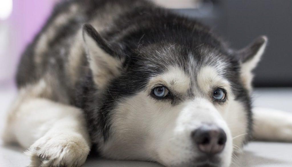 dog-3139757_640